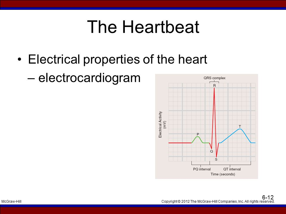 The Heartbeat Electrical properties of the heart – electrocardiogram