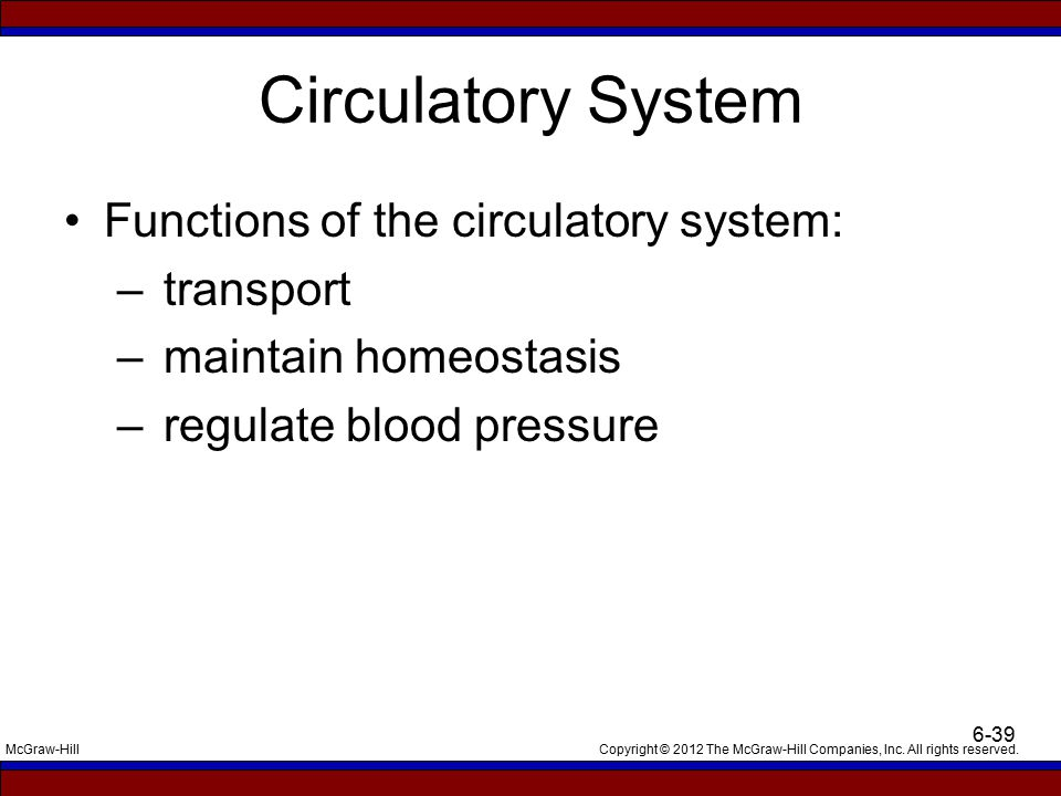 Circulatory System Functions of the circulatory system: transport