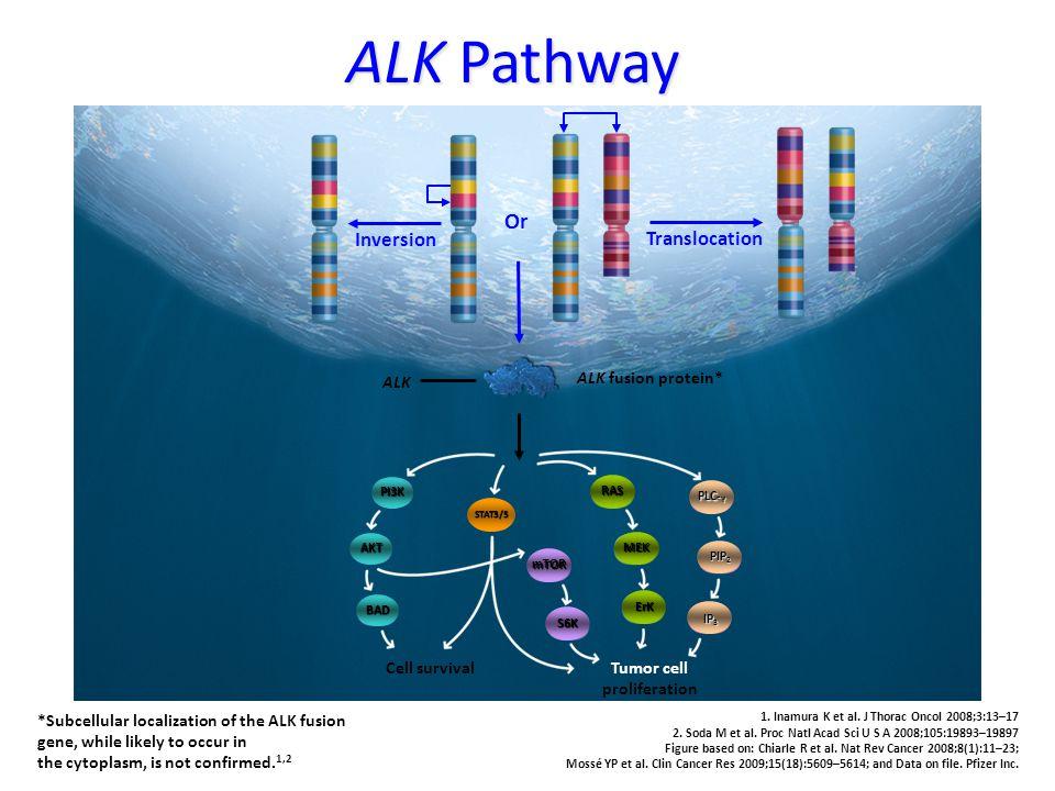 Tumor cell proliferation