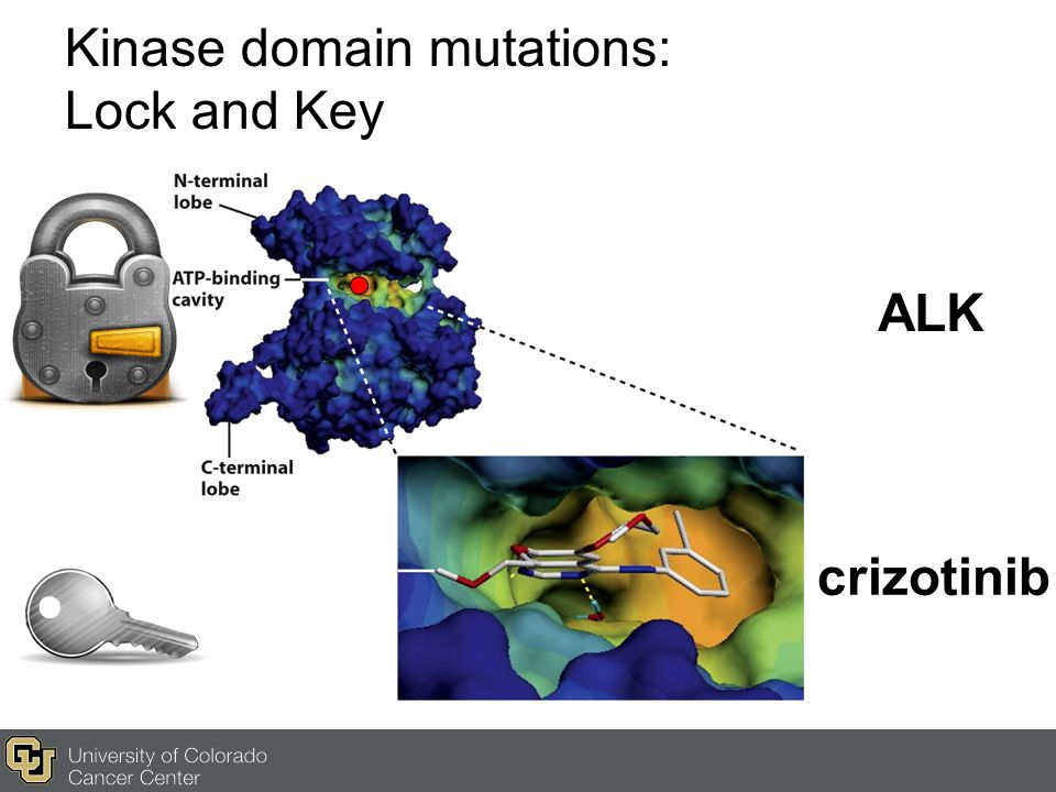 Kinase domain mutations: Lock and Key