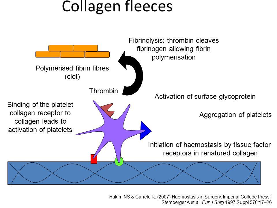Collagen fleeces Fibrinolysis: thrombin cleaves fibrinogen allowing fibrin polymerisation. Polymerised fibrin fibres (clot)
