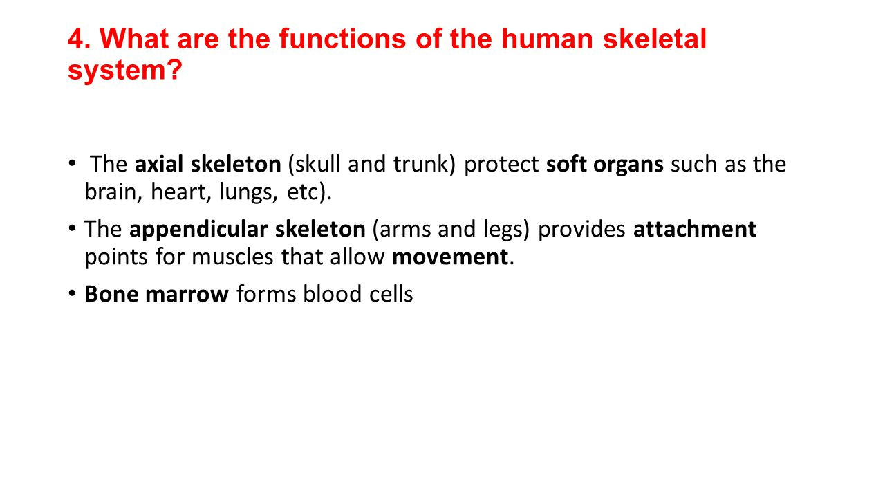 4. What are the functions of the human skeletal system