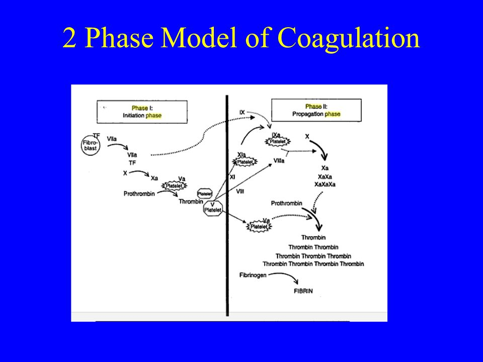 2 Phase Model of Coagulation