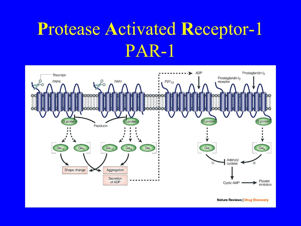 Protease Activated Receptor-1 PAR-1