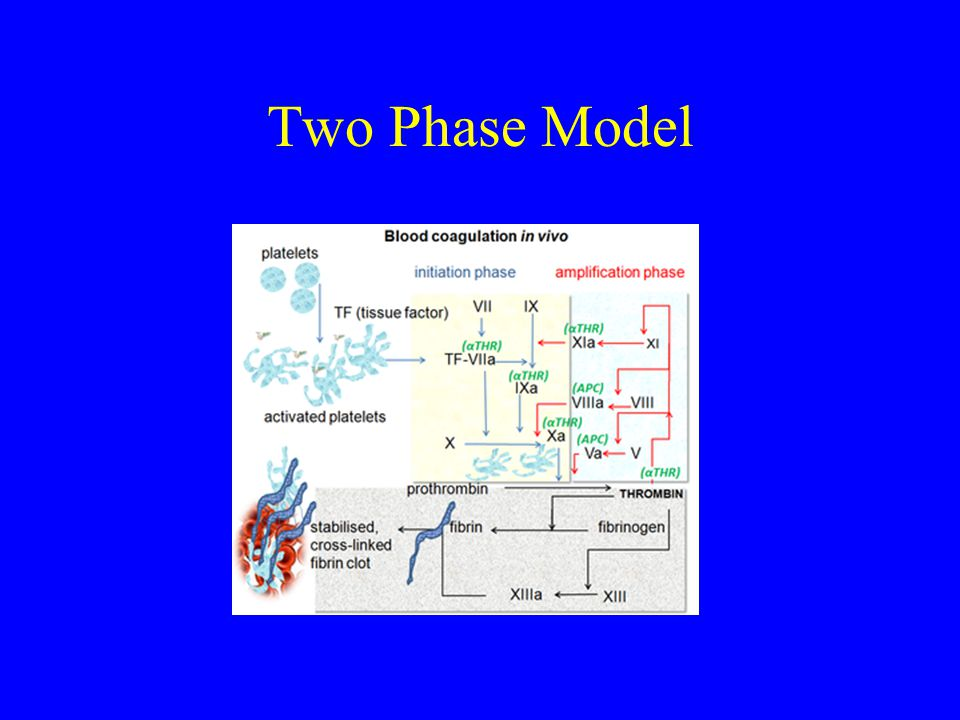 Two Phase Model