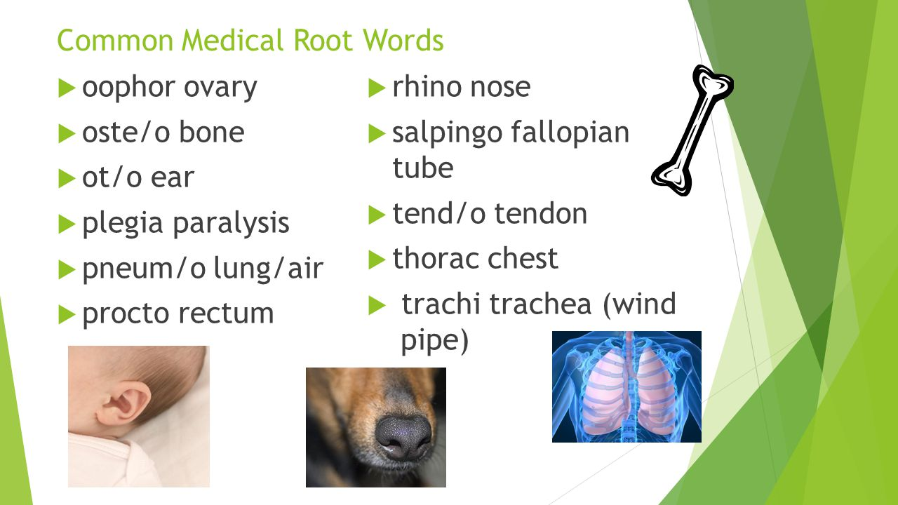 Common Medical Root Words