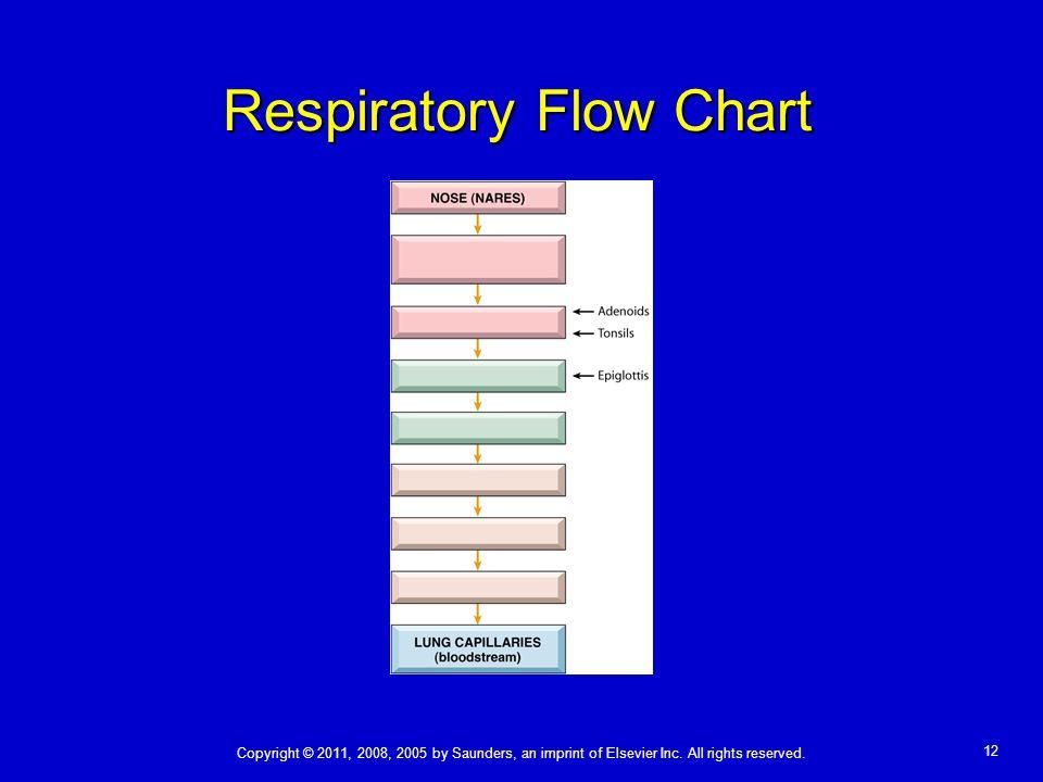 Respiratory Flow Chart