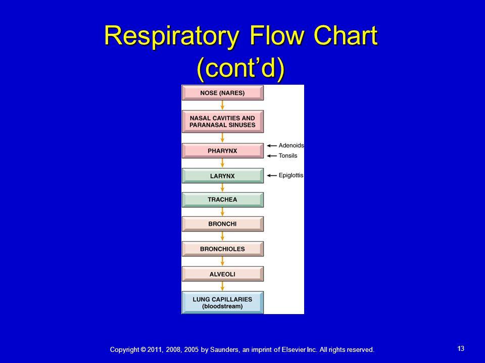 Respiratory Flow Chart (cont'd)