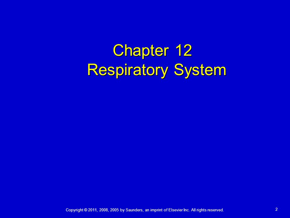 Chapter 12 Respiratory System