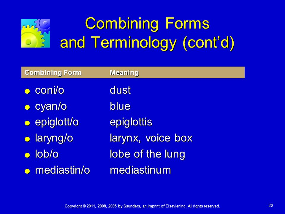 Combining Forms and Terminology (cont'd)