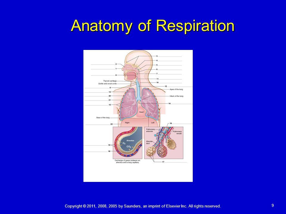 Anatomy of Respiration
