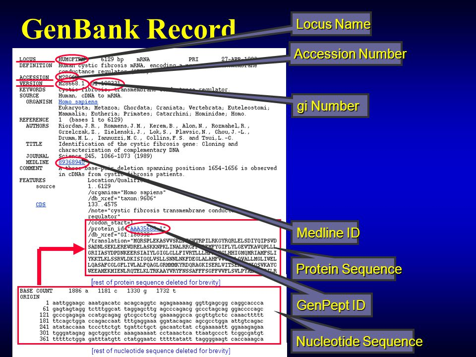GenBank Record Locus Name Accession Number gi Number Medline ID