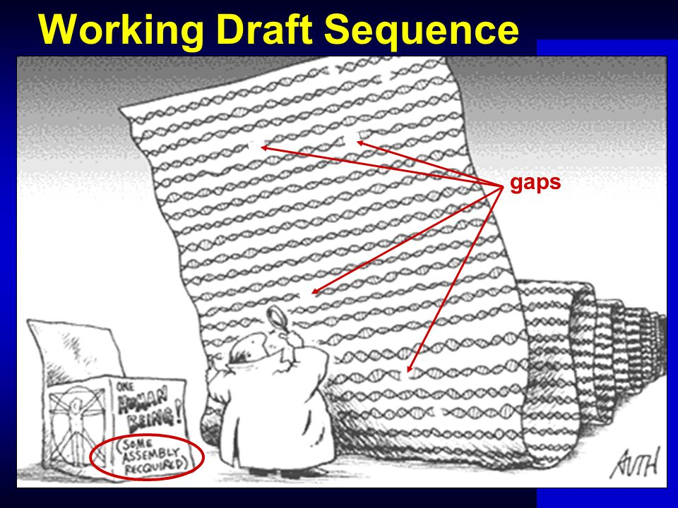Working Draft Sequence