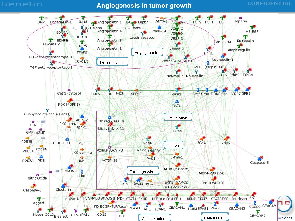 Angiogenesis in tumor growth