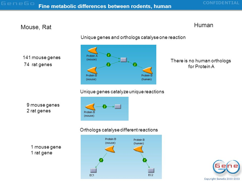 Fine metabolic differences between rodents, human