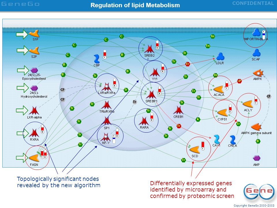Regulation of lipid Metabolism