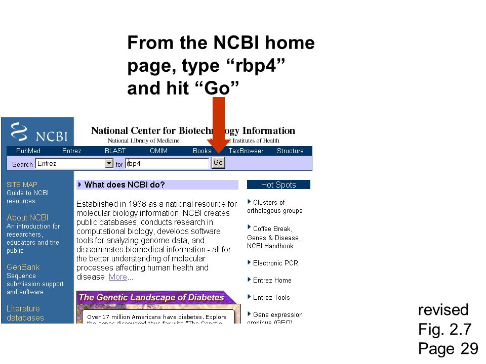 From the NCBI home page, type rbp4 and hit Go revised Fig. 2.7
