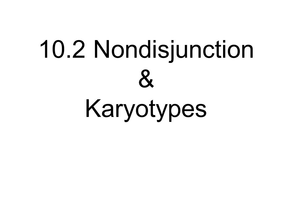 10.2 Nondisjunction & Karyotypes