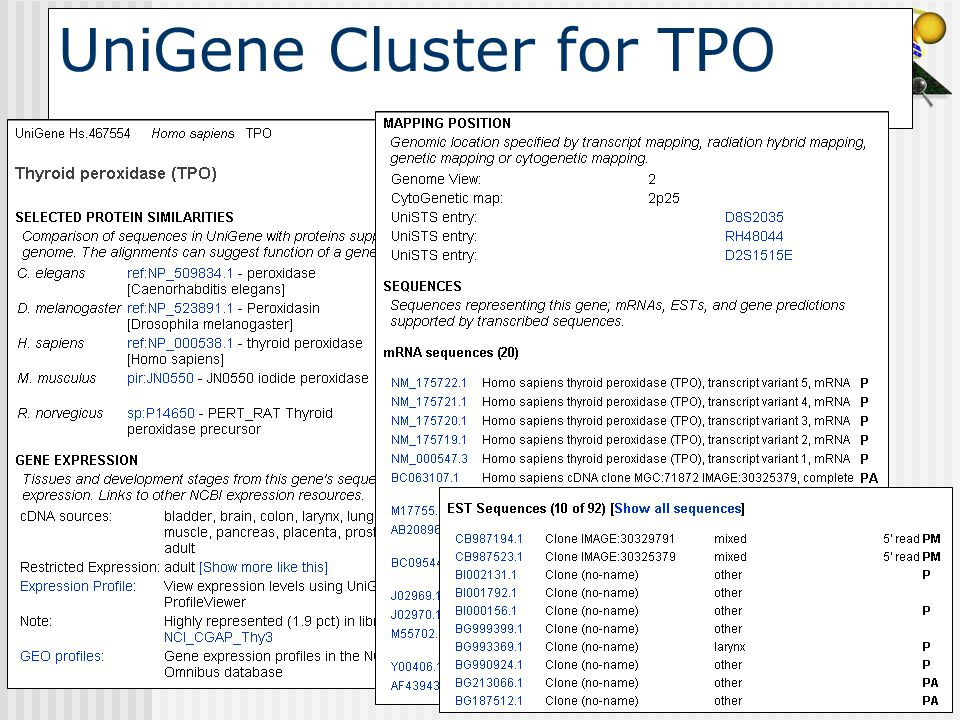 UniGene Cluster for TPO