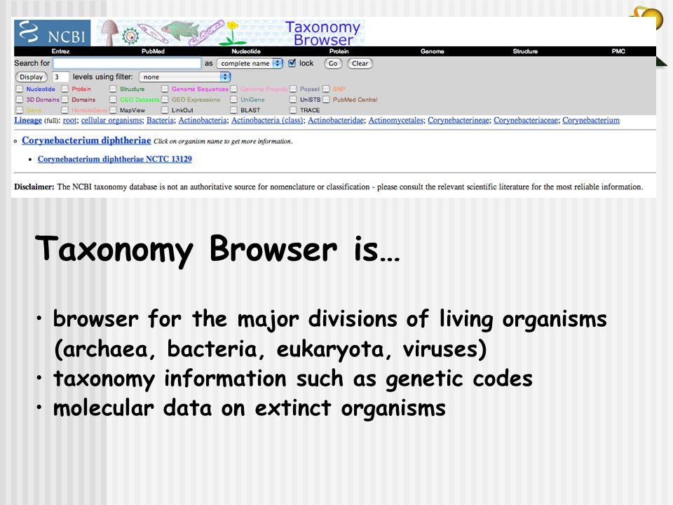 Taxonomy Browser is… browser for the major divisions of living organisms. (archaea, bacteria, eukaryota, viruses)