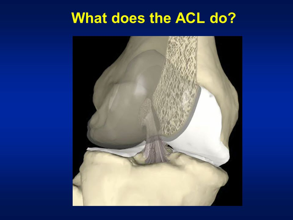 What does the ACL do