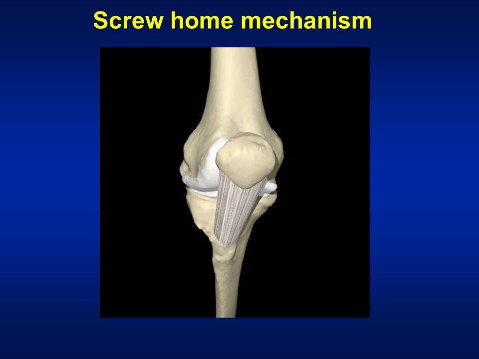 Screw home mechanism