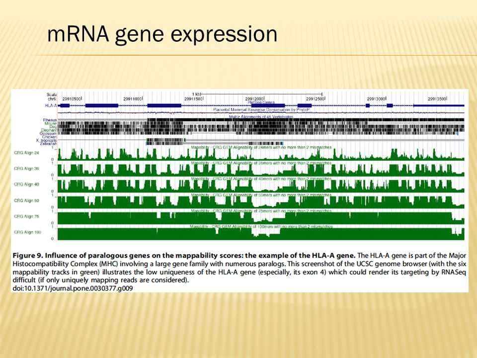 mRNA gene expression
