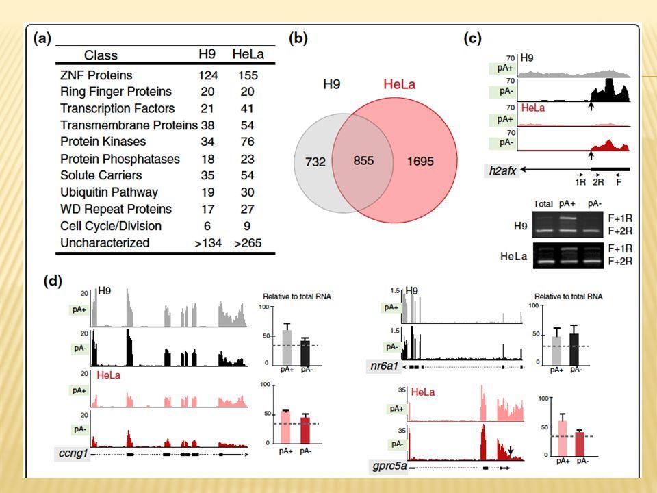 Figure 3 Classification of bimorphic transcripts