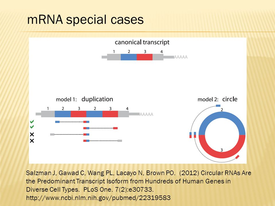 mRNA special cases
