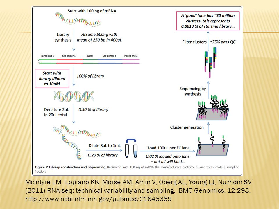 McIntyre LM, Lopiano KK, Morse AM, Amin V, Oberg AL, Young LJ, Nuzhdin SV. (2011) RNA-seq: technical variability and sampling. BMC Genomics. 12:293.