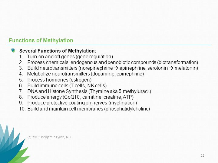 Functions of Methylation