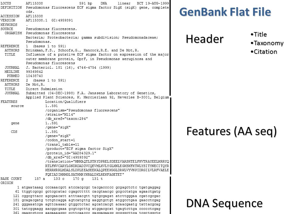 GenBank Flat File Header Features (AA seq) DNA Sequence Title Taxonomy