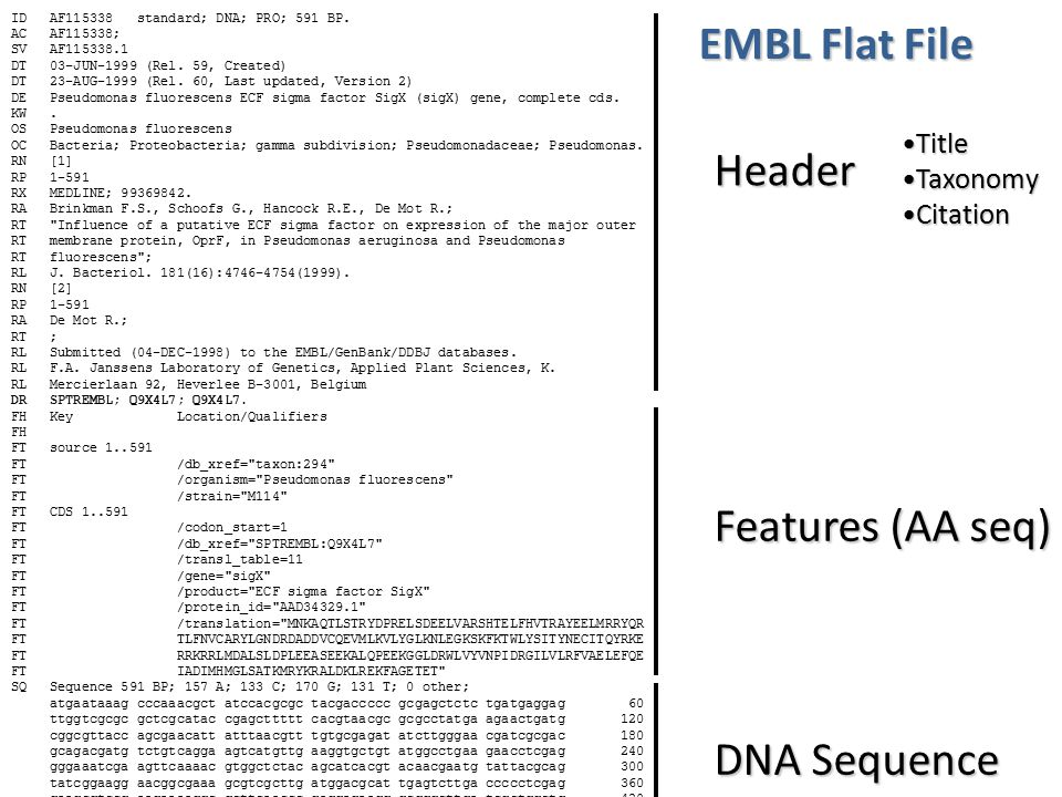 EMBL Flat File Header Features (AA seq) DNA Sequence Title Taxonomy