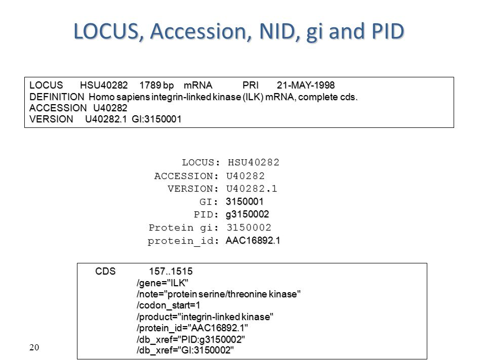 LOCUS, Accession, NID, gi and PID