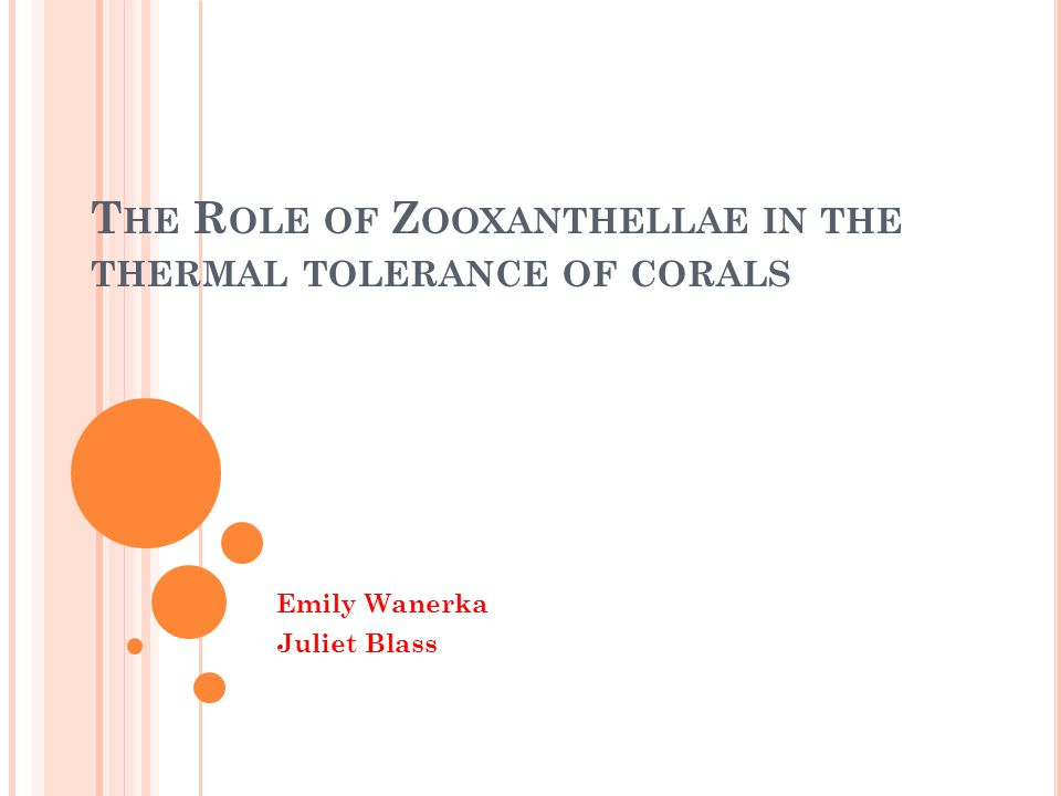 The Role of Zooxanthellae in the thermal tolerance of corals