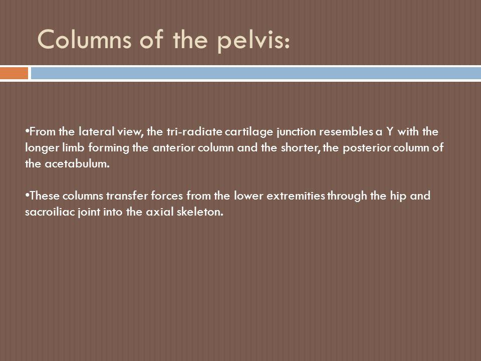 Columns of the pelvis: