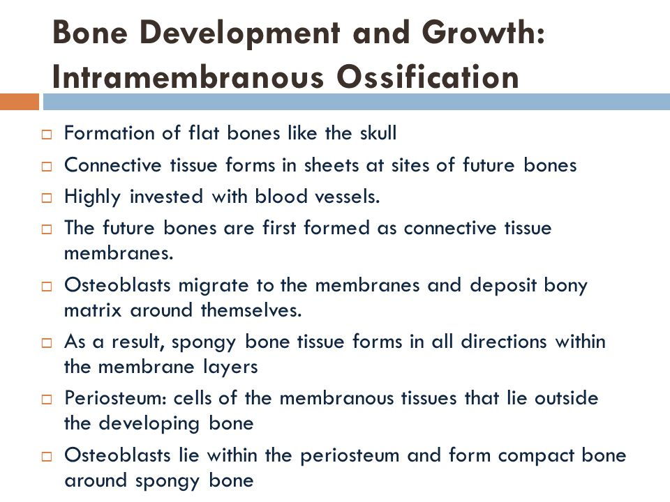 Bone Development and Growth: Intramembranous Ossification