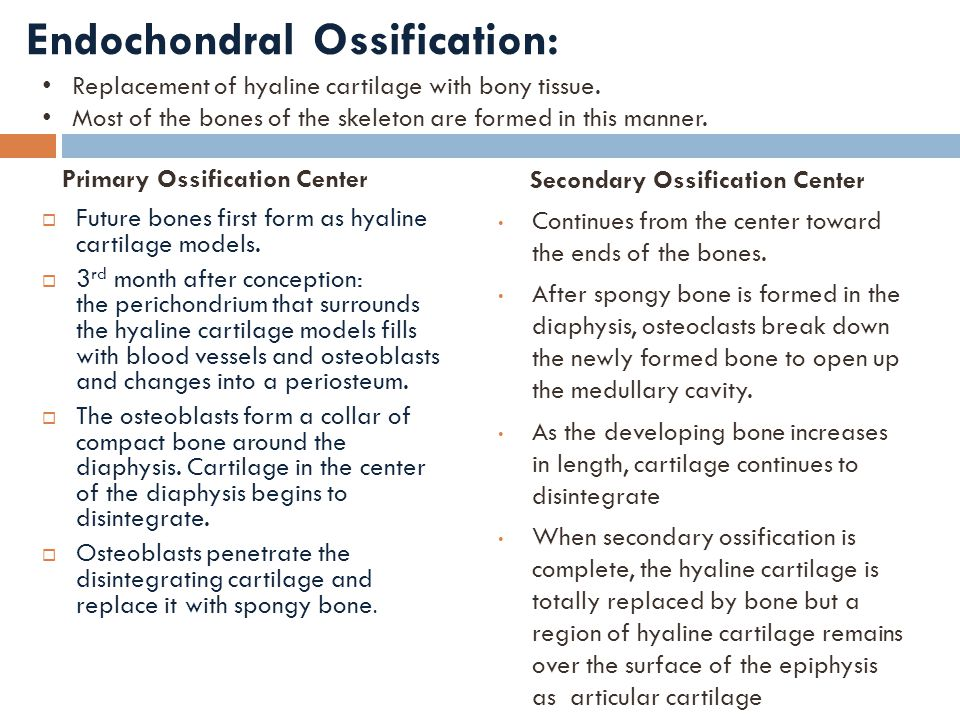 Endochondral Ossification:
