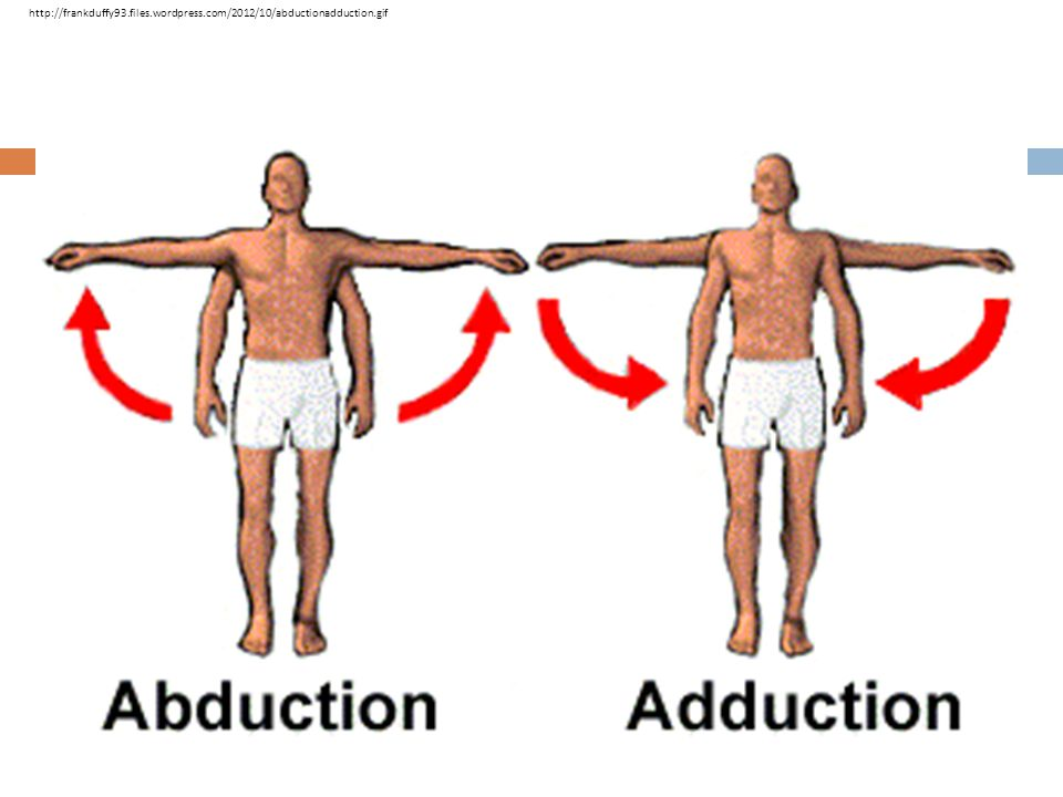 http://frankduffy93. files. wordpress. com/2012/10/abductionadduction