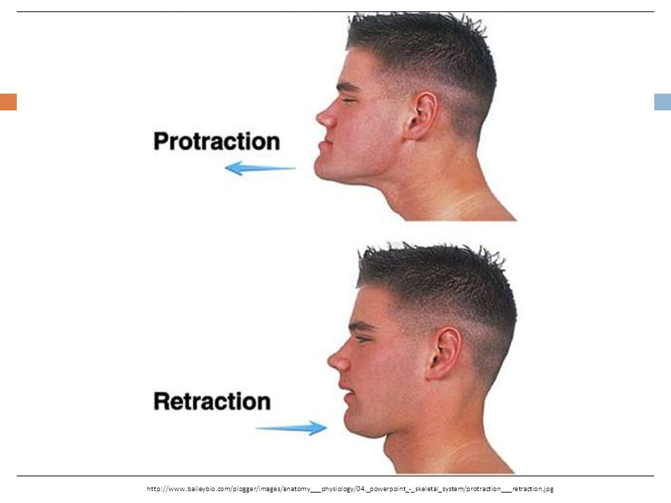 http://www. baileybio. com/plogger/images/anatomy___physiology/04