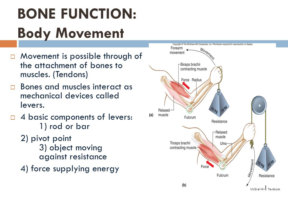 BONE FUNCTION: Body Movement