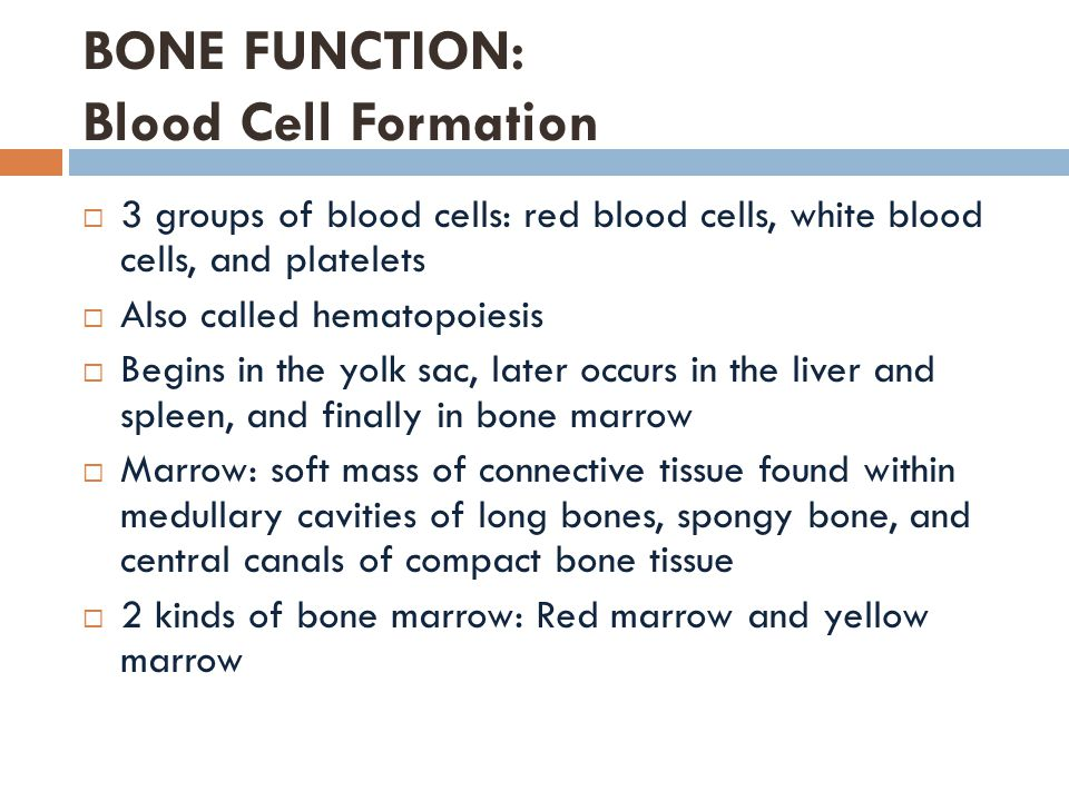 BONE FUNCTION: Blood Cell Formation