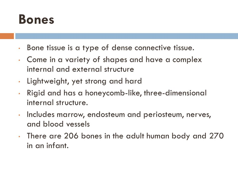 Bones Bone tissue is a type of dense connective tissue.