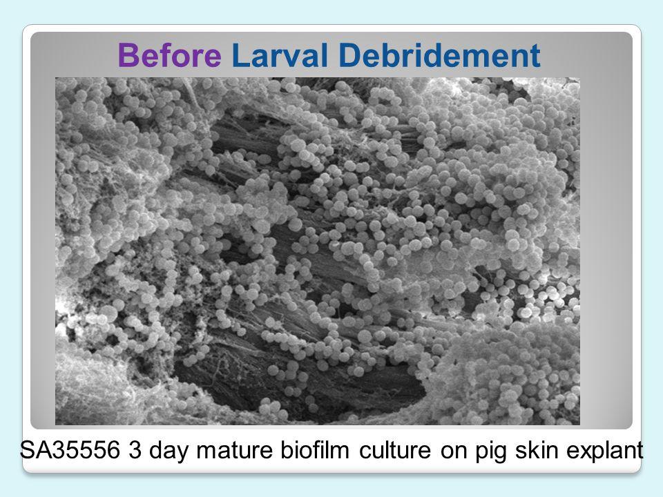 Before Larval Debridement