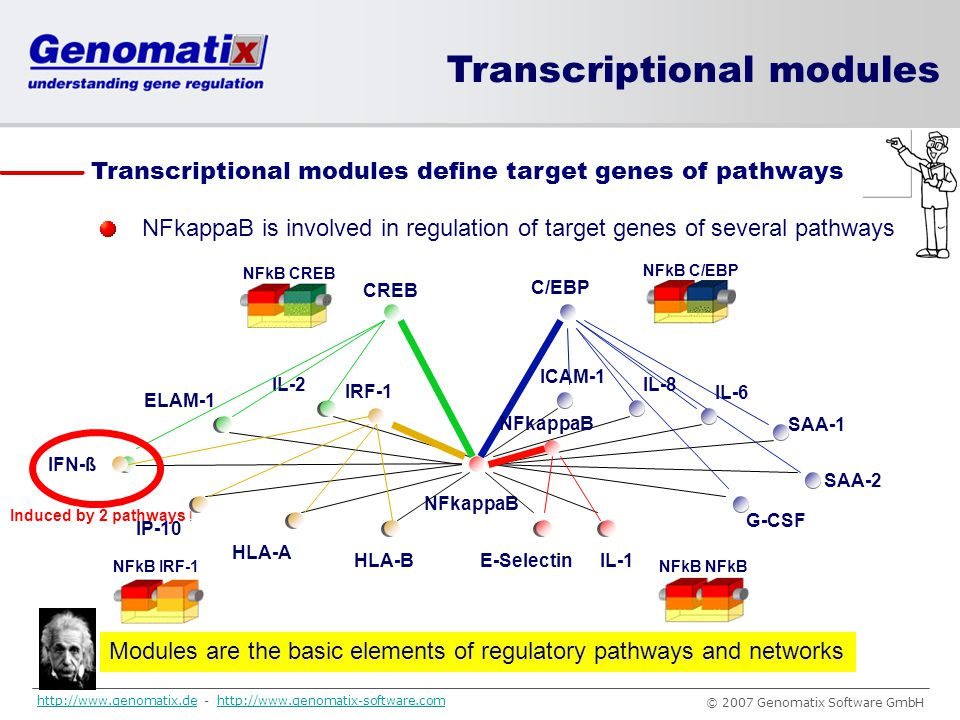 Modules are the basic elements of regulatory pathways and networks