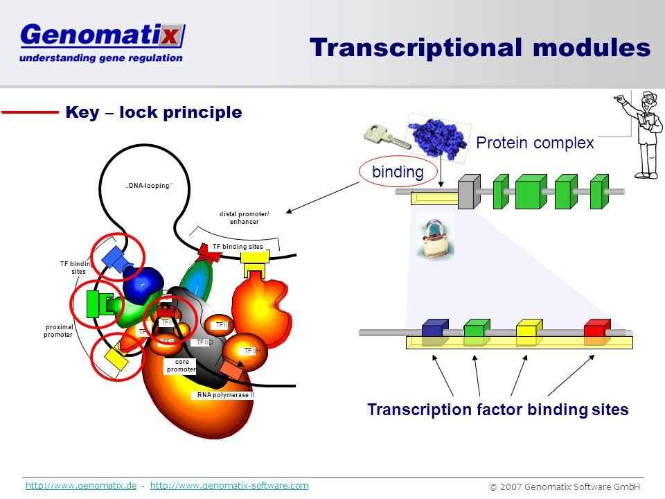 Transcriptional modules