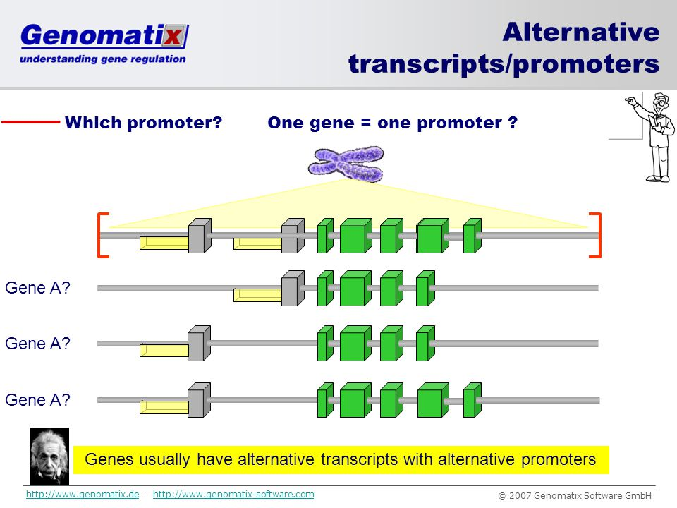 Genes usually have alternative transcripts with alternative promoters