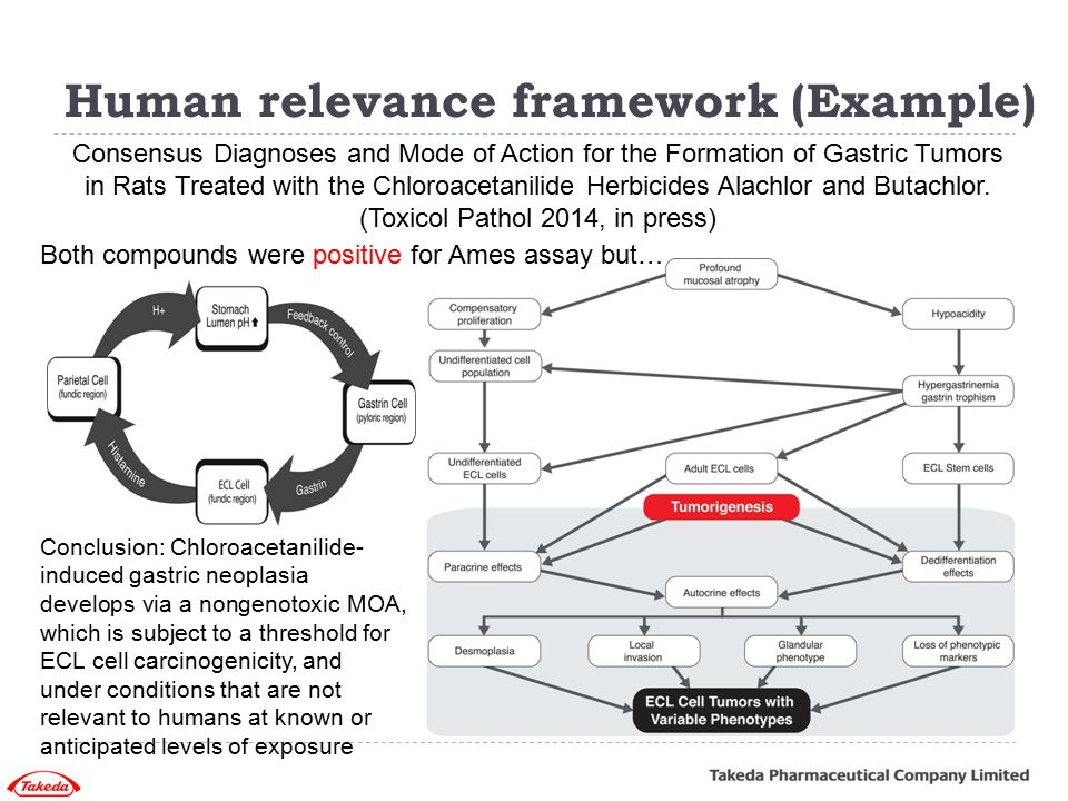 Human relevance framework (Example)