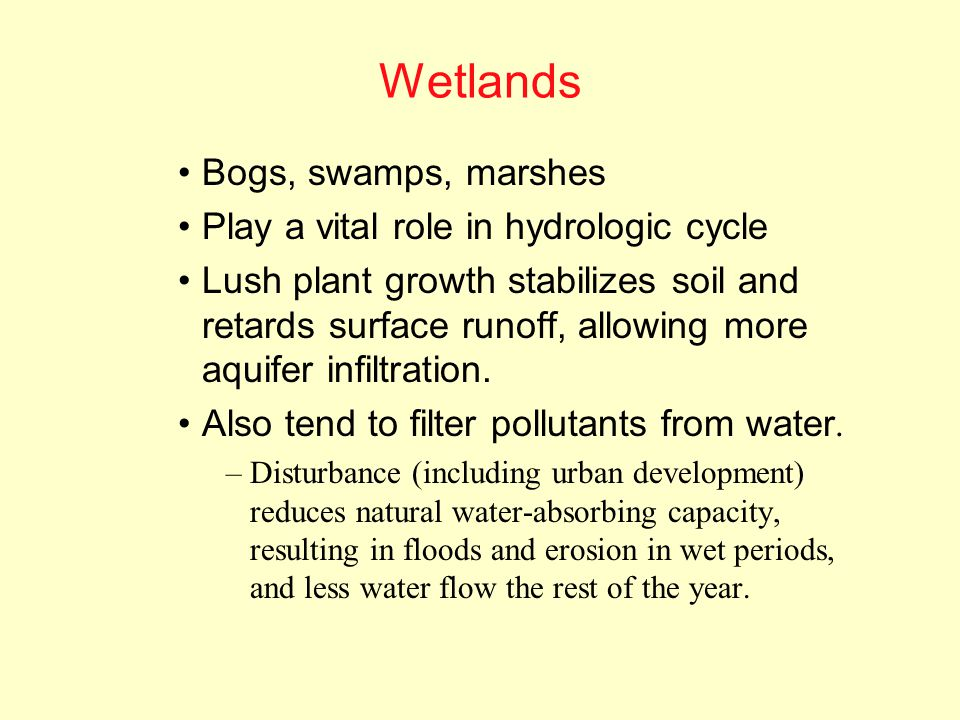 Wetlands Bogs, swamps, marshes Play a vital role in hydrologic cycle
