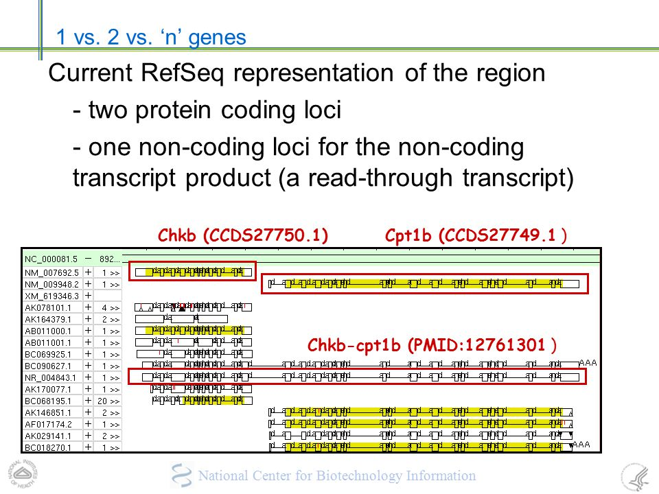 Current RefSeq representation of the region - two protein coding loci